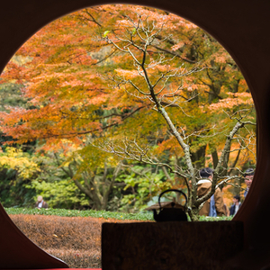 【1395】週末は北鎌倉にふらっと紅葉でも見に行こう!
