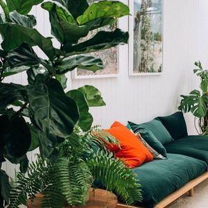 センス溢れる海外インテリア10選「好きなものだけに囲まれて暮らしたい」【#植物のある暮らし】