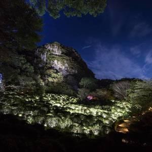 佐賀県の御船山楽園が舞台!チームラボ「かみさまがすまう森」開催中